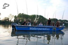 Wallerparadies Po Delta